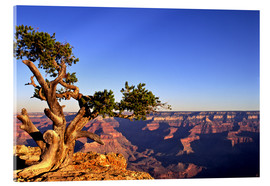 Acrylic print  Grand Canyon in Arizona - Paul Thompson