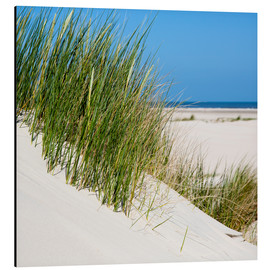 Aluminium print  Dunes with grass at the coastline of the german island Norderney (Germany) - gn fotografie