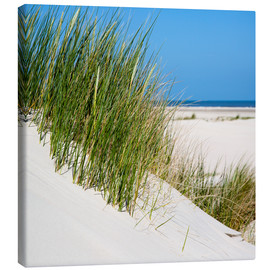 Canvas print  Dunes with grass at the coastline of the german island Norderney (Germany) - gn fotografie