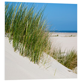 Foam board print  Dunes with grass at the coastline of the german island Norderney (Germany) - gn fotografie