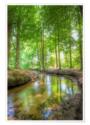 Premium poster Forest River