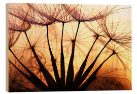 Wood print  Dandelion in the sunset II - Julia Delgado