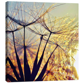 Canvas print  Dandelion in the sunset III - Julia Delgado