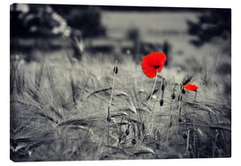 Canvas print  Red poppies in a cornfield - Julia Delgado