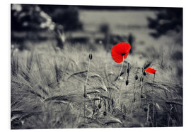 Foam board print  Red poppies in a cornfield - Julia Delgado