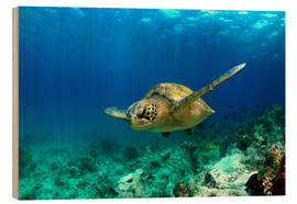 Wood print  Green sea turtle under water - Paul Kennedy