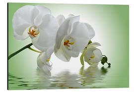 Aluminium print  Orchid with Reflection - Atteloi