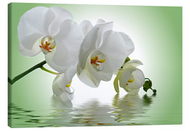 Canvas  Orchid with Reflection - Atteloi
