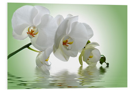 Forex  Orchid with Reflection - Atteloi