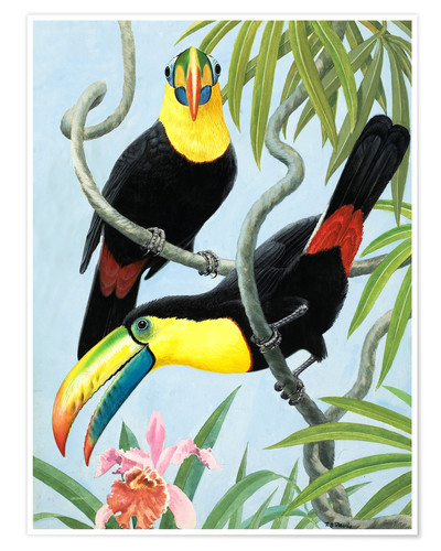 Premium poster Large beak birds