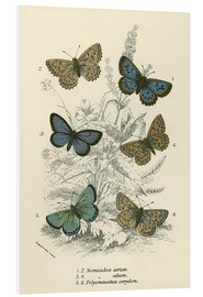 Foam board print  Butterflies - English School