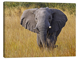 Canvas print  Elephant in the gras - Africa wildlife - wiw