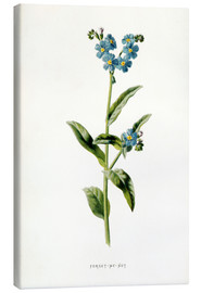 Canvas  Forget-Me-Not - Frederick Edward Hulme