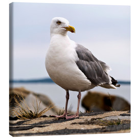 Canvas print  Seagull at the port of Sassnitz, on the island of Rügen - CAPTAIN SILVA