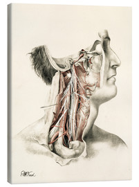 Canvas print  Head and neck. Internal carotid and ascending pharynx and cranial nerves in the neck area - G. H. Ford