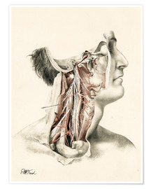 Premium poster  Head and neck. Internal carotid and ascending pharynx and cranial nerves in the neck area - G. H. Ford