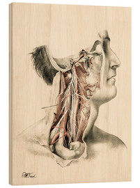 Wood print  Head and neck. Internal carotid and ascending pharynx and cranial nerves in the neck area - G. H. Ford