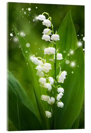 Acrylic print  Lily of the valley - Steffen Gierok