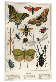 Acrylic print  Insects - English School