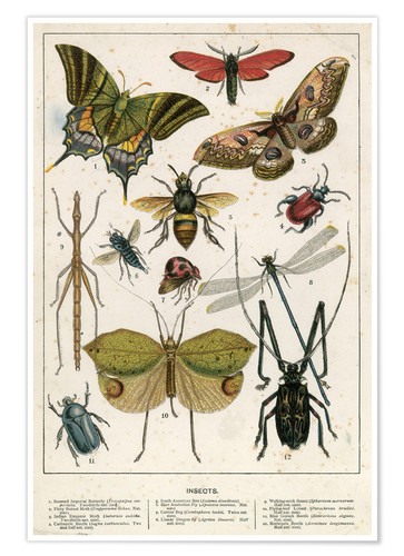 Poster Insects