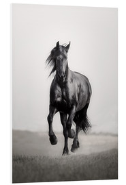Foam board print  Horse Friesian in the steppe - Monika Leirich