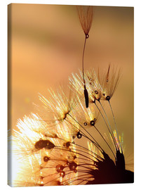 Canvas  Dandelion golden touch - Julia Delgado
