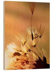 Wood print  Dandelion golden touch - Julia Delgado