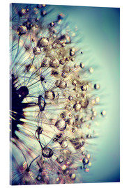 Acrylic glass  Dandelion Blue Crystal - Julia Delgado