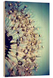 Wood print  Dandelion blue crystal - Julia Delgado