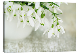 Canvas  Snowdrop Flowers - Nailia Schwarz