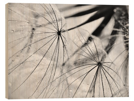 Wood print  Dandelion black and white - Julia Delgado