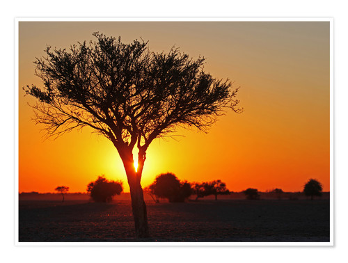 Premium poster Sunrise in Africa