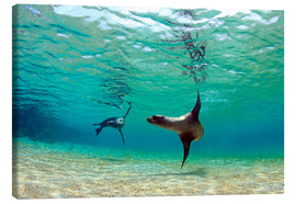Canvas print  Sea lion lagoon Galapagos Islands - Paul Kennedy