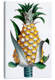 Canvas print  Pineapple, 1789.