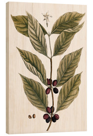 Wood print  Coffee Plant - Elizabeth Blackwell