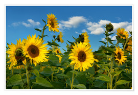 Poster  Sunflowers - Atteloi