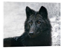 Joachim G. Pinkawa - the black wolf