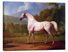 Canvas print  Racehorse Mambrino - George Stubbs