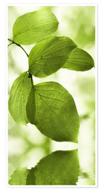 Premium poster Green leaves