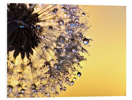 Foam board print  Dandelion yellow - Julia Delgado