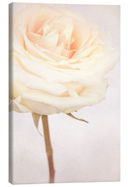 Canvas print  WHITE WEDDING ROSE - INA FineArt