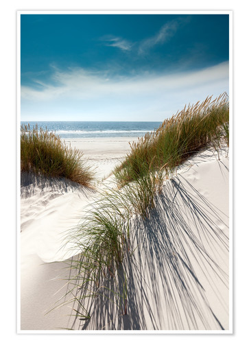 Premium poster Dunes with fine beach grass