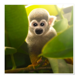 Poster  baby monkey - Photoplace Creative