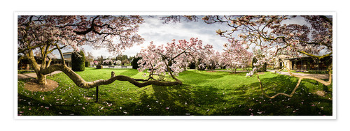 Premium poster Magnolia in Bloom