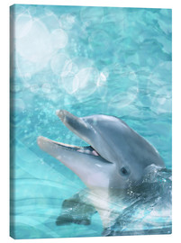 Canvas print  Dolphin - Humor - Dolphins DreamDesign