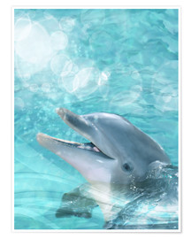 Poster  Dolphin - Humor - Dolphins DreamDesign