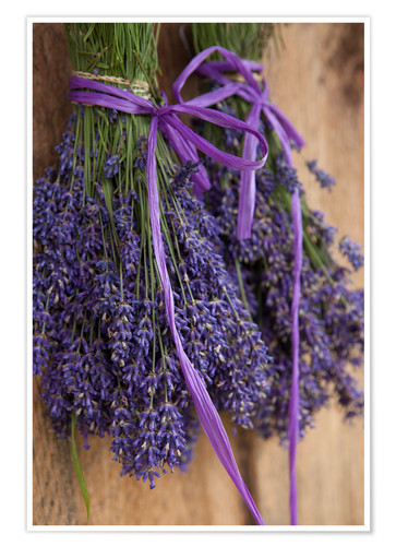 Premium poster Drying Lavender Bouquet
