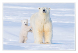 Premium poster Polar Bear family