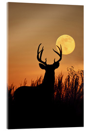 Acrylic print  Whitetail Deer with full moon - Larry Ditto