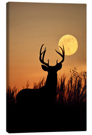 Canvas print  Whitetail Deer with full moon - Larry Ditto